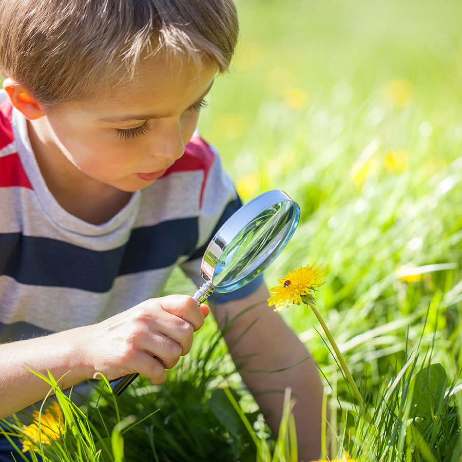 Young boy exploring nature in a meadow with a magnifying glass looking at a ladybird
